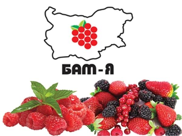 Международно изложение на малинопроизводителите и ягодоплодните